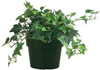 Best cheap ivy plants Reviews