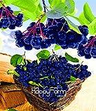 ¡Auténtico!10 Unids/bolsa Semillas Anuales de Frutas y Verduras Aronia Viking.Diy Home Garden & Amp; Semillas de Bonsai