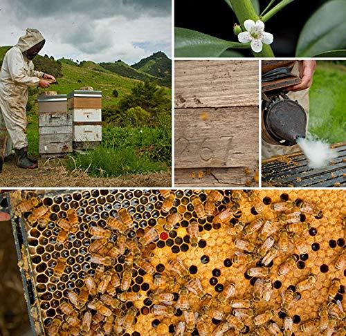 Manuka Honey UMF 8+ | Raw and Pure | Pesticide Free Honey from New Zealand 14.1 oz (400g) by Tahi