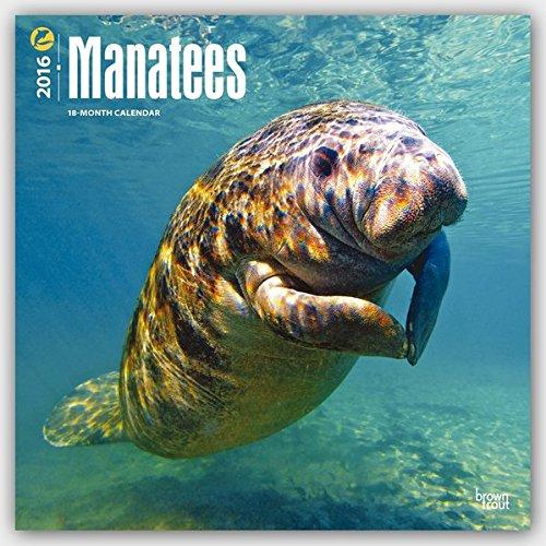 Manatees 2016 - Seekühe - 18-Monatskalender: Original BrownTrout-Kalender [Mehrsprachig] [Kalender]
