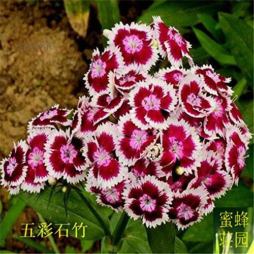 Graines colorés petits exclus brodé bambou pour Bebaizhen Dix types de 100 graines américaines (wu cai shi) 2 zhu