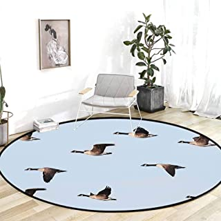 Rug pad Geese Decor Collection Canada Goose Branta Canadensis in Flight Clear Sky Traveling Feather Picture Blue Grey Black Carpet Party Decorations 5'Round