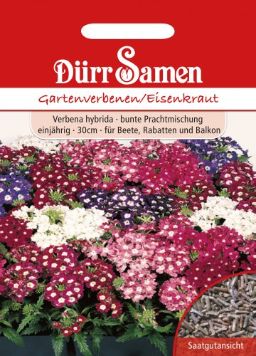 Dürr Samen 0740 Gartenverbenen (Gartenverbenensamen)