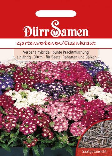 Dürr-Samen Gartenverbenen/Eisenkraut