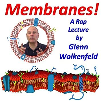 Membranes!