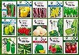 Grill Auberginen 100 Samen: Gemüsesamen Non-GMO Garten Bunte Kleinpaket ?? ?? ?? ? ?? ??