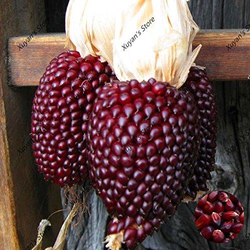 20pcs maïs Semences du maïs rouge fraise Popcorn légumes frais Graines aucun graines de plantes ogm pour ferme jardin familial