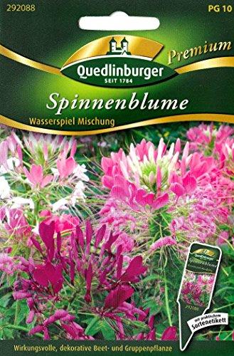 Spinnenblume, ca. 80 Samen, Wasserspiel Mischung, Cleome hassleriana