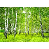 Fototapete Wald - ALLE WALDMOTIVE auf einen Blick ! Vlies PREMIUM PLUS - 350x245 cm - SUNNY BIRCH FOREST - Birkenwald Bäume Wald Sonne Birkenhain Birke Birken Gras Natur Baum - no. 112