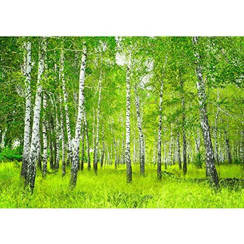 Fototapete 400x280 cm - ALLE TOPSELLER auf einen Blick ! Vlies PREMIUM PLUS - SUNNY BIRCH FOREST - Birkenwald Bäume Wald Sonne Birkenhain Birke Gras Natur Baum - no. 112