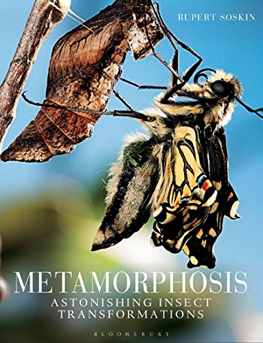 Metamorphosis: Astonishing insect transformations