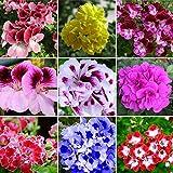 ♪ fiore colore: misto ♪ quantità: circa 50pcs ♪ nome dell' articolo: semi di geranio ♪ gerani Bloom tutte le stagioni e richiedono pochissima manutenzione a tenerli a svolgere i loro migliori. ♪ hanno Bloom grandi e belle foglie per fare una perfett...