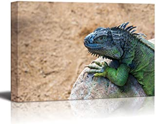 Canvas Prints Wall Art - Iguana Lizard on The Rock Wild Reptile Photograph | Modern Wall Decor/Home Decoration Stretched Gallery Canvas Wrap Giclee Print & Ready to Hang - 16
