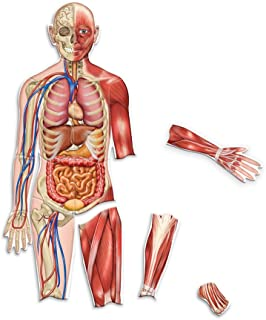 Learning Resources Double-Sided Magnetic Human Body (LER6044)
