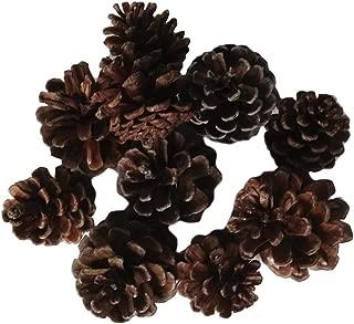 dailymall 約10個入り 松ぼっくり パインコーン 花瓶 花輪 装飾品 松かさ テーブルの装飾 自然乾燥 DIY 工芸品