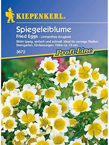 Limnanthes douglasii Spiegeleiblume Fried Eggs