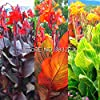 10 pezzi Canna Semi Beautiful Flower Seed Mix Indica Lily piante da giardino Bulbi Fiori all'aperto in vaso bonsai Flores. regalo a casa #4