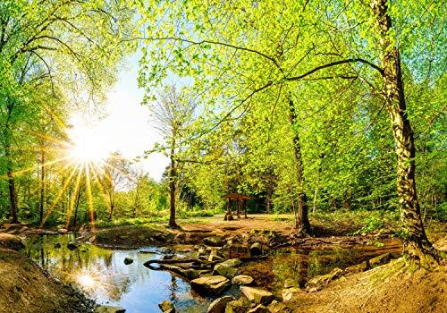 wandmotiv24 Fototapete Wald im Sommer mit Bach und Sonne, XXL 400 x 280 cm - 8 Teile, Fototapeten, Wandbild, Motivtapeten, Vlies-Tapeten, Bäume, Wasser, Steine M5751