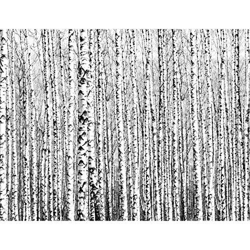 Fototapete Wald Birken 352 x 250 cm Vlies Tapeten Wandtapete XXL Moderne Wanddeko Wohnzimmer Schlafzimmer Büro Flur Schwarz Weiss 9288011a