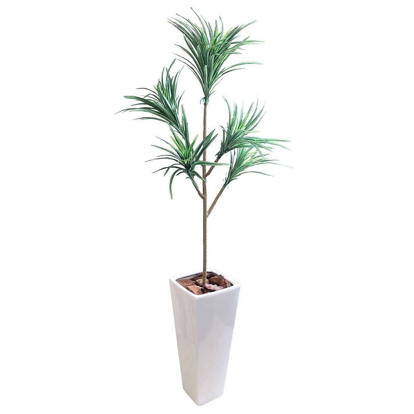 唯物論ライトニング引退するフェイクグリーン 大型 ユッカツリー(青年の木) 5本枝 145cm 白鉢セット SC/CT触媒加工済[tb1829]