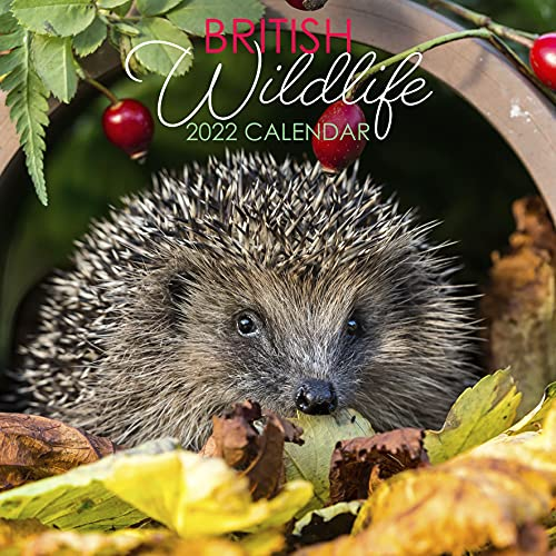 2022 British British Wildlife, Animals and Nature Large Square Hanging Wall Calendar with Stunning Photography. Daily, Weekly, Monthly 12 Month Family Planner, Organiser, Calendar