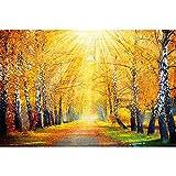 GREAT ART® Mural De Pared – Otoño Dorado – Decoración Mural Abedul Bosque Naturaleza Paisaje Árbol Callejón Sendero Otoño Sol Estaciones Parque Bosque Decoración (210x140 Cm)