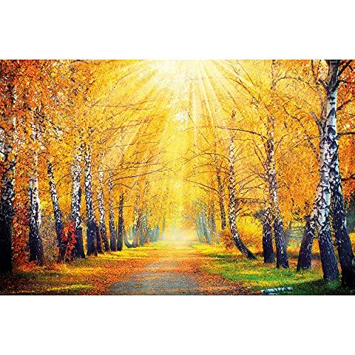 GREAT ART® Fototapete – Goldener Herbst Birken Allee – Waldweg Wald Bäume Natur Landschaft Forst Laub Sonne Foto Bild Wandtapete Dekoration Wandbild (336 x 236 cm)