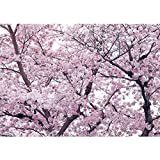 Vlies Fototapete PREMIUM PLUS Wand Foto Tapete Wand Bild Vliestapete - Apfelblüten Kirschblüten Baum - no. 3529, Größe:416x254cm Vlies