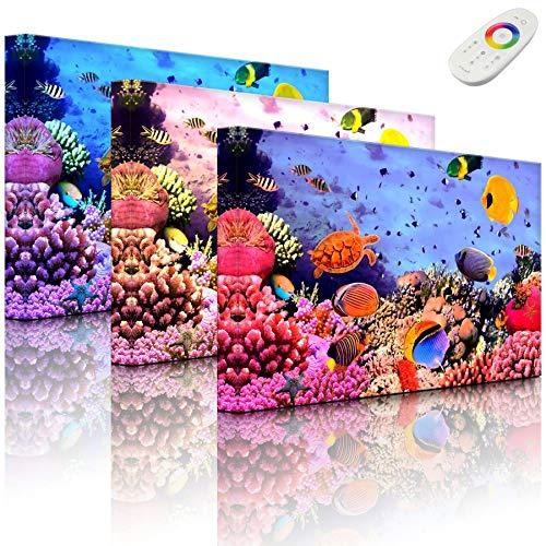Lightbox-Multicolor | LED Bild Leuchtbild | Bunte Fische über Korallenriff | 100x70 cm | Fully Lighted