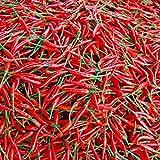 semi di peperoncino rosso, 100 pezzi di semi di peperoncino rosso, capsico, pepe di cayenna, spezie vegetali