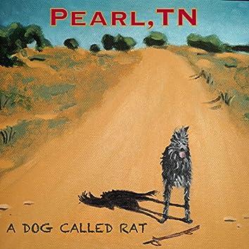 A Dog Called Rat