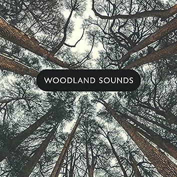 Woodland Sounds: Beautiful Piano & Nature Melodies