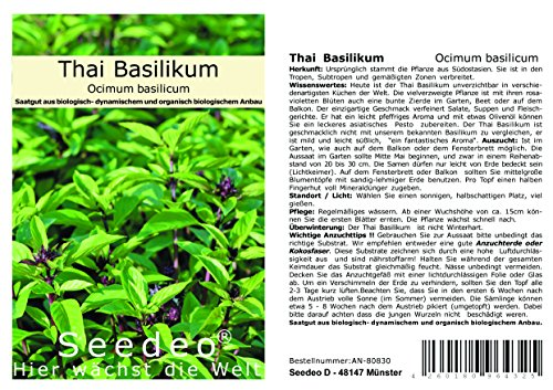 Seedeo Lot de 100 graines de basilic Thai (Ocimum Basilicum)