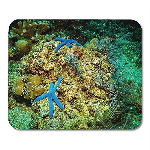 Muis Pad Aquatische Blauwe Dieren Seastar Op Bali Koraal Tuin Indonesië Rood Aquarium Atol Kantoor benodigdheden Mouses Pad Mousepad
