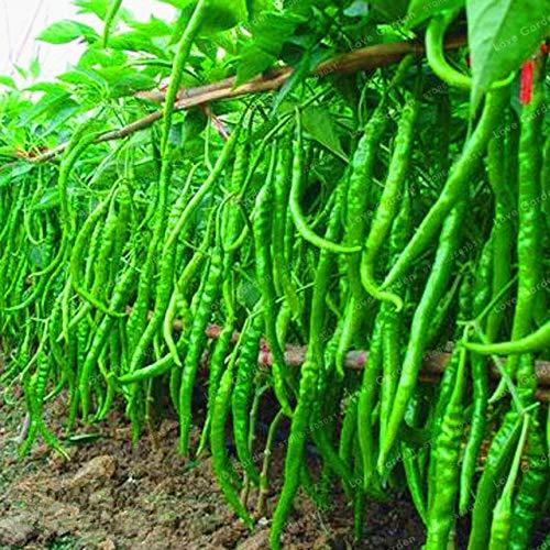 Shopvise de piment de semences de légumes 100 unités; couleur 11