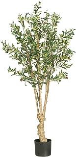 pretty olive tree