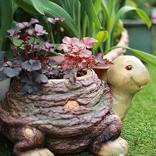 zenggp Animal Snail Succulent Planter Pot Cactus Planter Pot Home Flower Pot Plant,Turtle