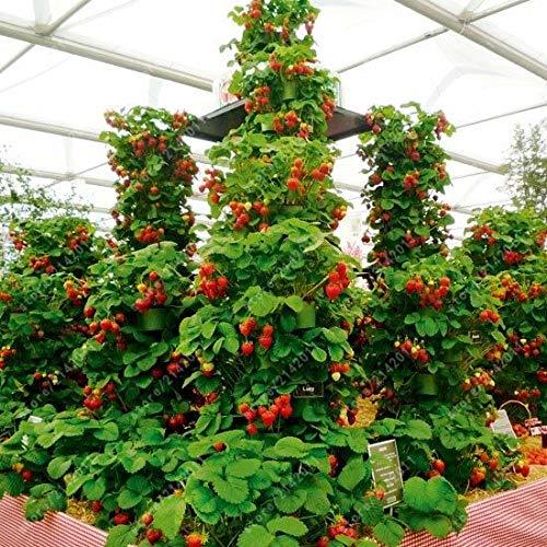 SONIRY 300pcs / Bag Beerenpflanzen, Beeren Bio-Obst Beerenbaum Bonsai Topfpflanze für das Heim Klettern