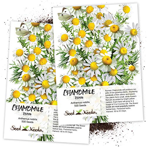 Seed Needs, Roman Chamomile (Anthemus nobilis) Twin Pack of 500 Seeds Each Non-GMO