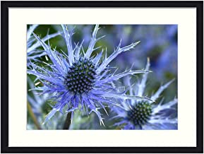 OiArt Wall Art Print Wood Framed Home Decor Picture Artwork(24x16 inch) - Sea Holly Flower Eryngium Plant Flower Blue Spiky
