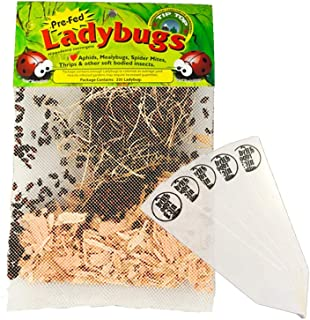 300 Pre-Fed Live Ladybugs   Guaranteed Live Delivery   Targets Aphids, Moth Eggs, Mites, Scales, Thrips, Leafhoppers, Mealybugs and Other Slow-Moving Insects + THCity Stakes