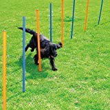 Pet Dogs Outdoor Games Agility Exercise Training Equipment Agility Starter Kit with 12 Weave Poles