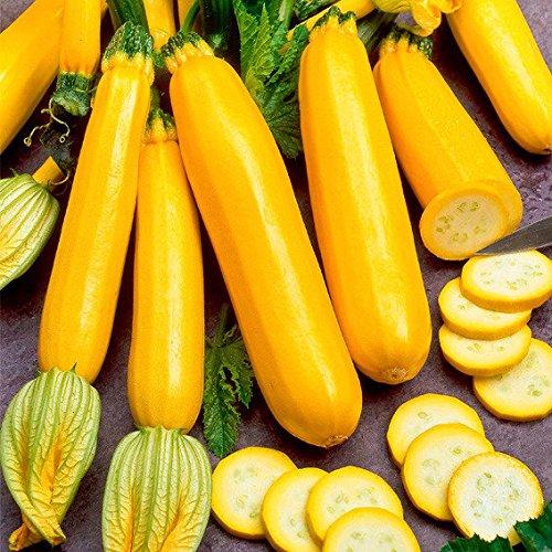 SummerRio Garten- 10 Pcs Gelb Zucchini Samen Squash Zucchini Bio Gemüsesamen Ertragreich Winterhart Mehrjährig für Garten Balkon Terrasse