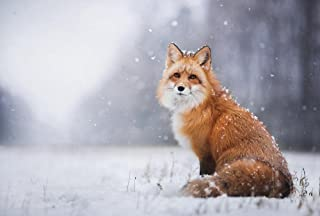 FHYGJD Red Fox In The Snowy Winter Art Print Canvas Poster,Home Wall Decor(13x20 inch)