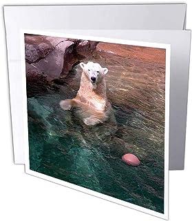 3dRosa gc_12211_2 Grußkarten Eisbär Eisbär Eisbär im Wasser mit Ball , 15,2 x 15,2 cm, 12 Stück B07BJDLL2R  Hervorragender Stil d8e2a1