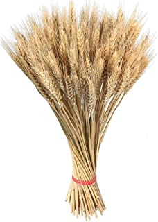 total-shop 100pcs Artificial Flower Artificial Plant Large Wheat Dried Flowers Garden Plants Natural Primary Colors Real Wheat for Wedding Decorations