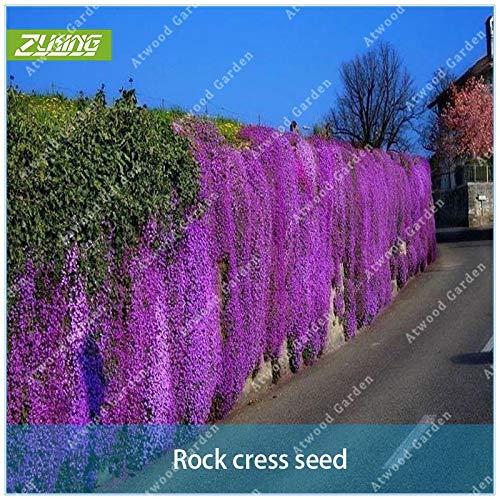SANHOC 100pcs Lila Felsen-Kresse Perennial Bodendecker Fels Sellerie von mehrjährigen Garten-Blumen für Zuhause Dekorative