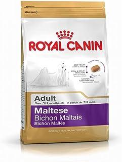 Royal Canin - Alimento seco para Perro maltés 24 canino, 1,