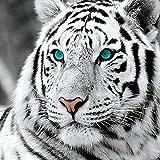 guijiumai 5d Diamante Pintura Bricolaje Set de Pintura de Diamante Tigre blanco40x40cm Sin Marco