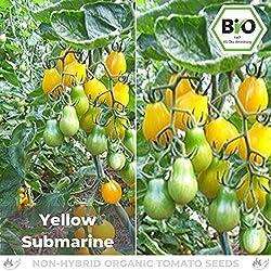 Pepperworld Yellow Submarine Bio Cocktail-Tomate, 10 Korn, Tomaten-Saatgut zum Anpflanzen, ertragreich und schmackhaft